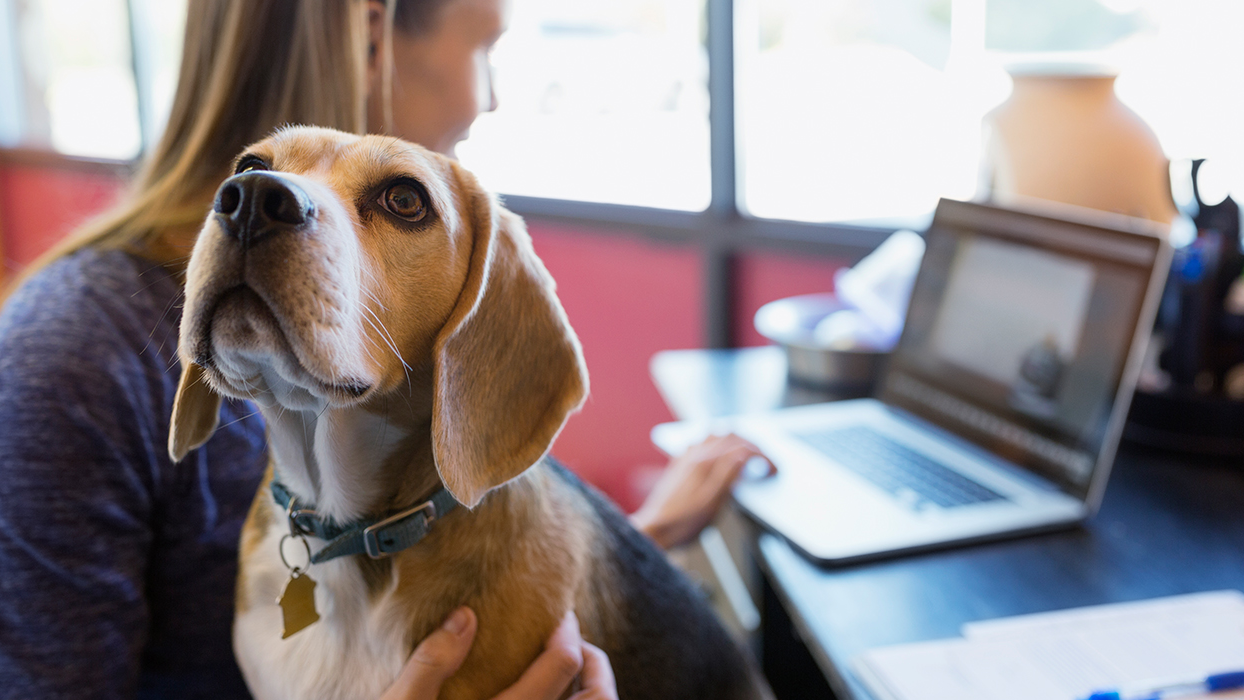Become a pet-friendly workplace thumbnail